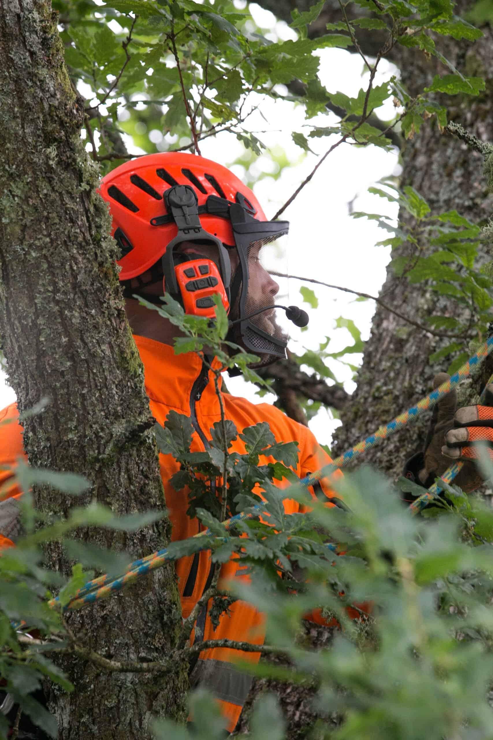 Beskärning av träd i Halland