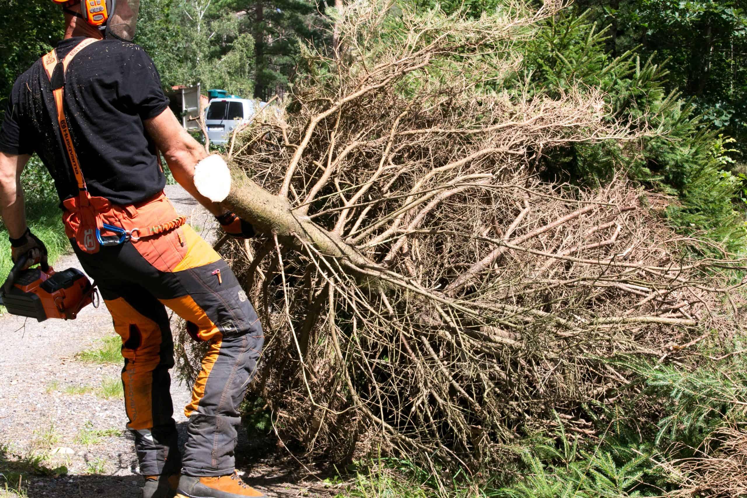 Skogsavverkning och röjning