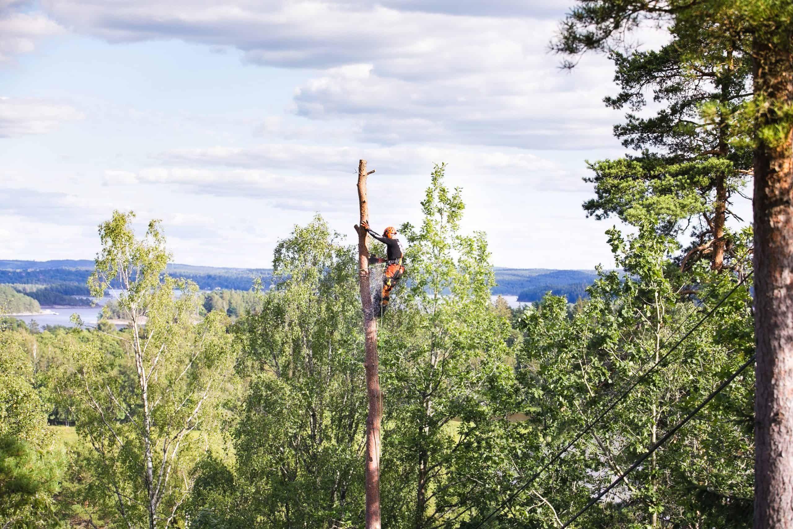 Trädfällning Varberg