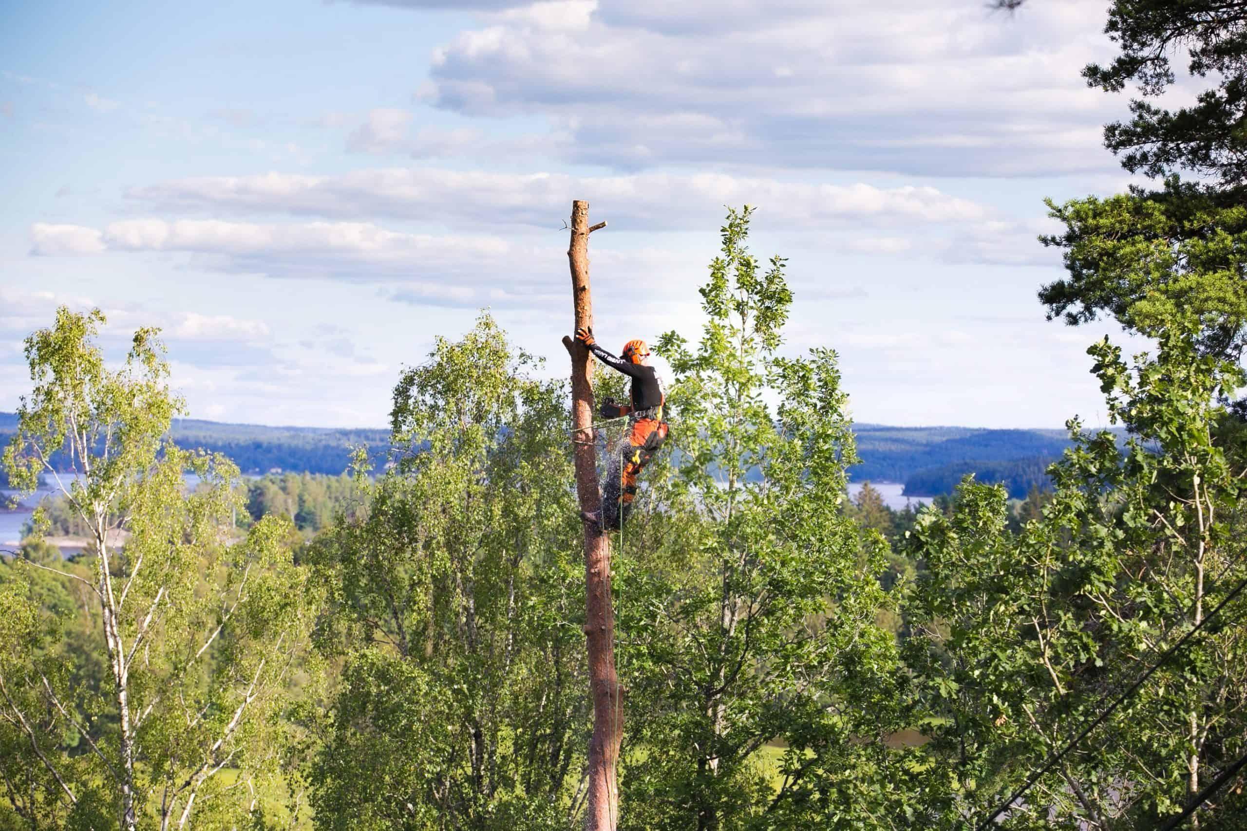 Trädfällning Falkenberg
