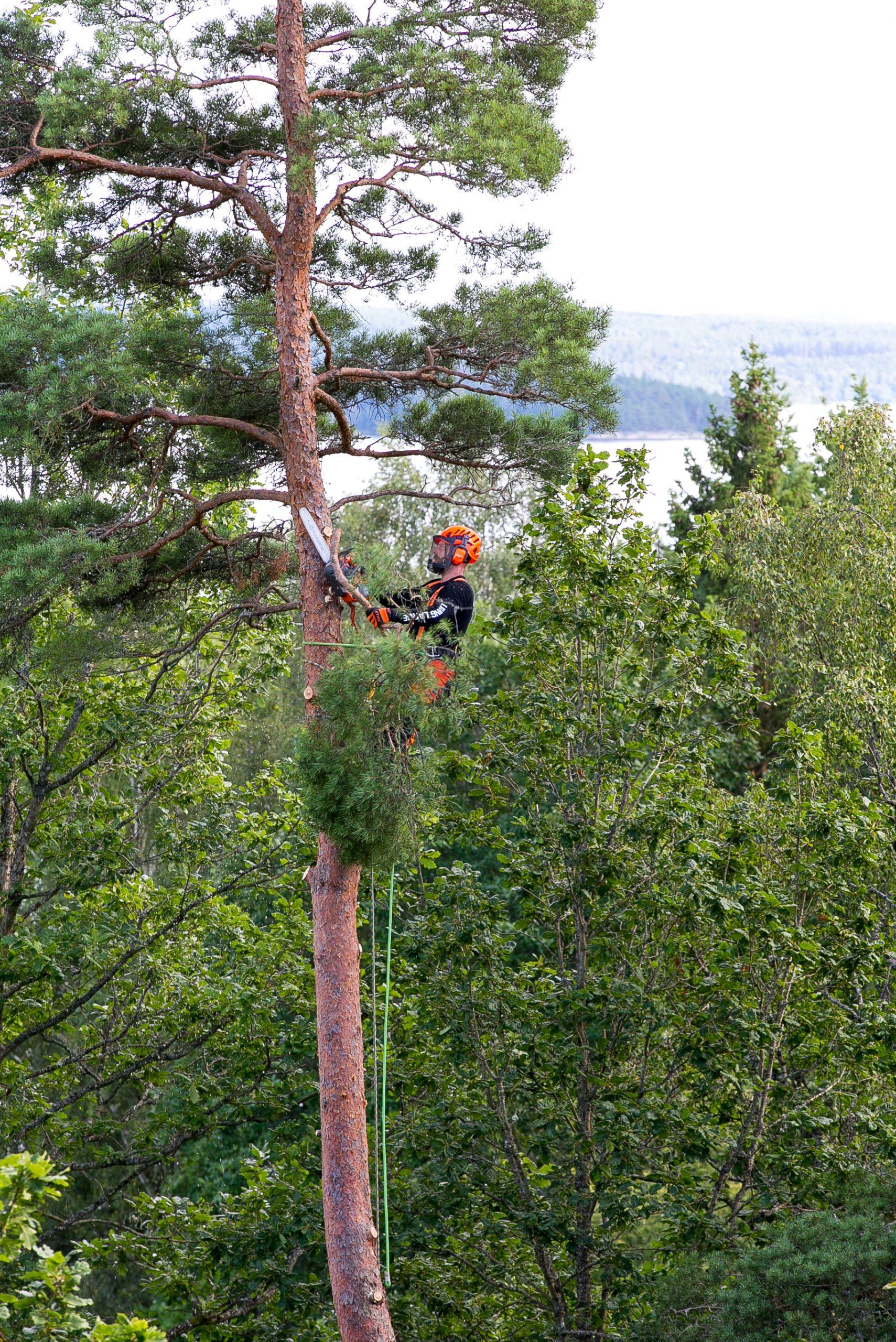 trädfällning halmstad